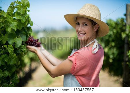 Portrait of happy female farmer holding red grapes at vineyard
