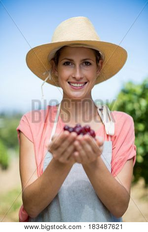 Portrait of smiling female farmer holding red grapes at vineyard