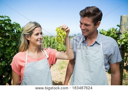 Smiling couple holding grapes while standing at vineyard