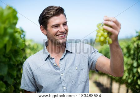 Happy young man holding grapes at vineyard