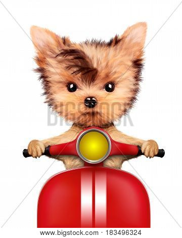 Funny adorable puppy sitting on a red motorbike, isolated on white. Delivery concept. 3D illustration of yorkshire terrier with clipping path