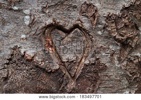 horizontal front view of heart shape carved in the bark of tree