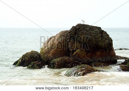 Tiny bird on top of elephant shaped rock at Kovalam Beach in Tiruvanthapuram Kerala India Asia