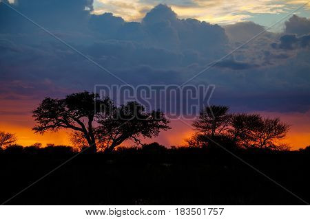 Deep orange colours with sunset as a big thunderstorm approaches behind the trees.