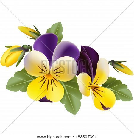 Vector yellow pansy flowers with green leaves