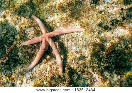 Red starfish on the seabed. Cape between Kata and Kata Noi, Phuket, Thailand
