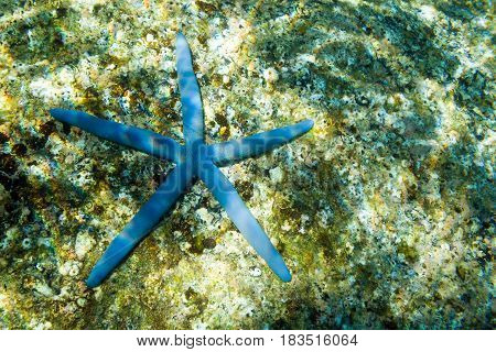 Blue starfish on the seabed. Cape between Kata and Kata Noi, Phuket, Thailand