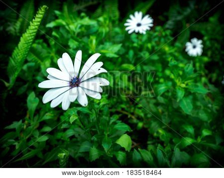 Tiny White color Flower In deep Forest