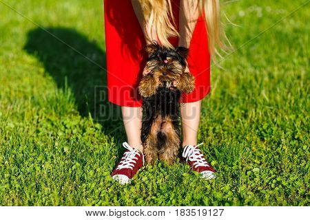 Young girl in the red sneakers standing on the grass with her dog.