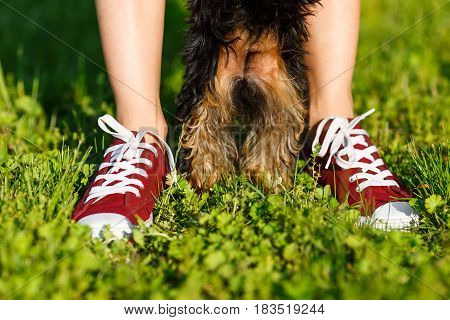 Young girl in the red sneakers standing on the grass with her do.