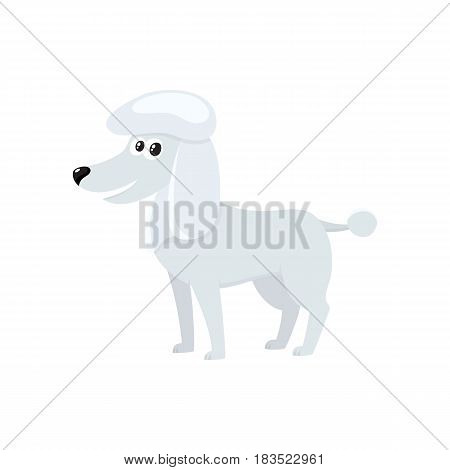 Cute, well groomed, purebred white poodle dog character, cartoon vector illustration isolated on white background. Lovely white poodle dog character, mouth open, colorful cartoon illustration