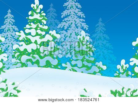Illustration of a snow-covered wood with firs