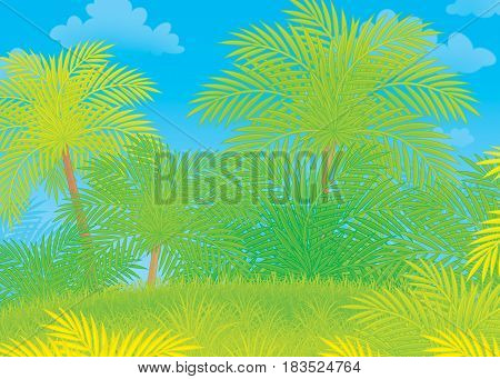 Green tropical jungle. Illustration of an exotic rain-forest with palms
