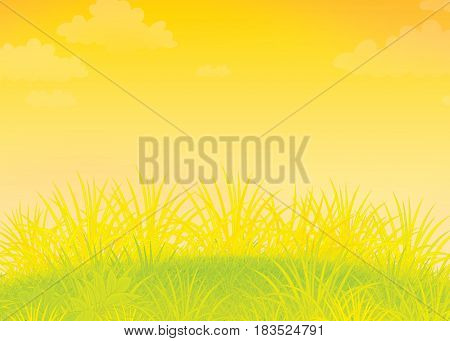 Summer field with green grass. Illustration of a sunny meadow with wild plants
