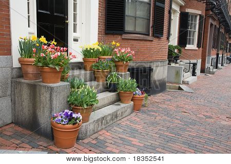 Spring Flowers In The City