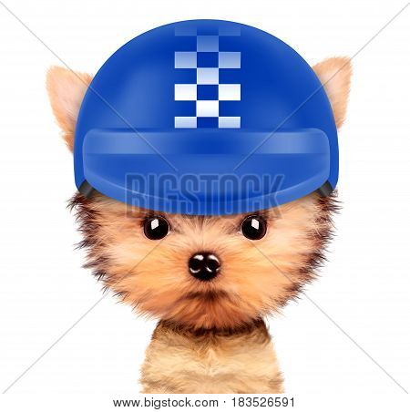 Funny racer dog wearing blue helmet, isolated on white background. Sport and championship concept. Realistic 3D illustration of yorkshire terrier with clipping path