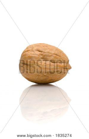 Walnut And Reflection