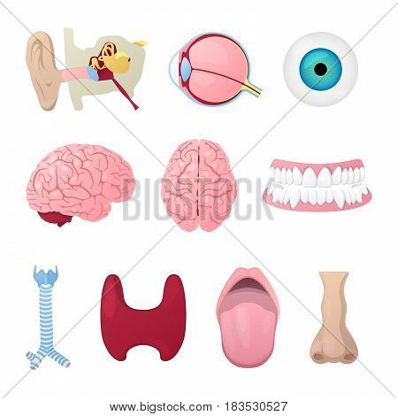Anatomy Medical Poster with Head Organs Eye, Brain, Nose and Ear. Vector illustration