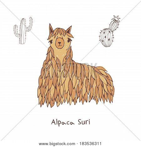 Alpaca suri hand drawn doodle vector illustration
