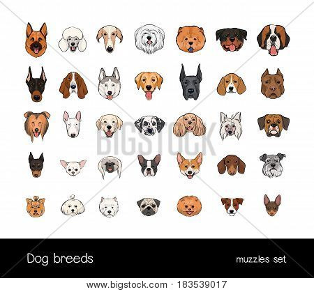 Dog breeds, muzzle set. Collection with hand drawn colorful realistic illustration