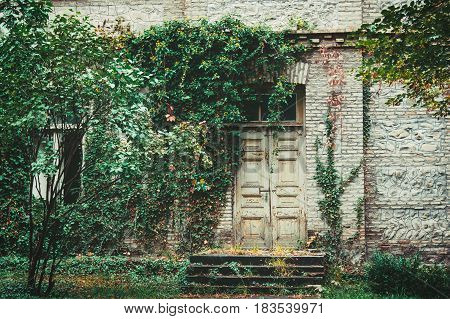 The old door to the house woven with wild grapes, in color tinting