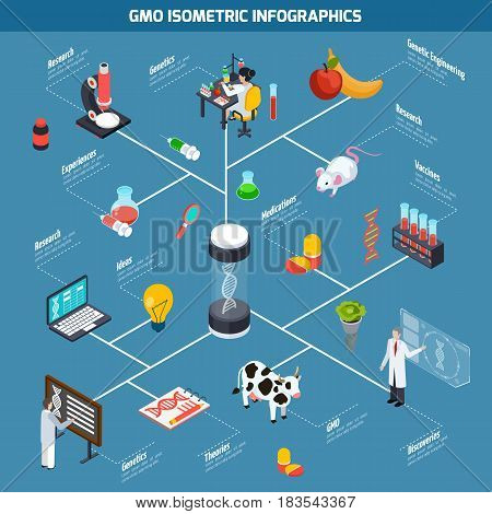 GMO isometric infographics layout from theoretical researches through genetic experiments to discovery and safety testing vector illustration