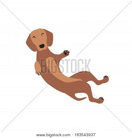 Ginger Dachshund Vector Dog