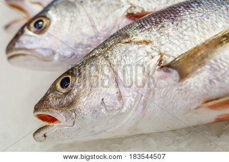 Fresh Meagre On Ice At Seafood Market