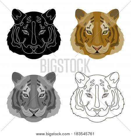 Tiger icon in cartoon design isolated on white background. Realistic animals symbol stock vector illustration.