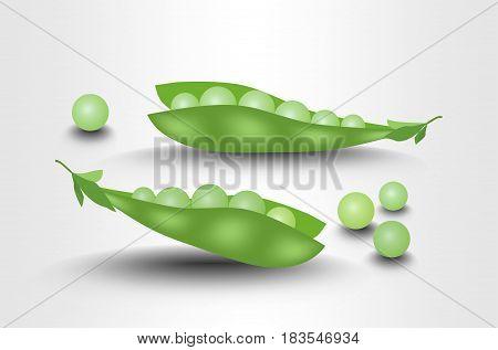 Pea pods fresh, photorealistic isolated illustration on white background, vector EPS 10