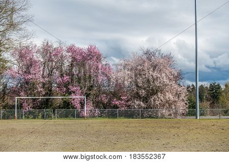 A view of a fence and Cherry trees in Seatac Washington.