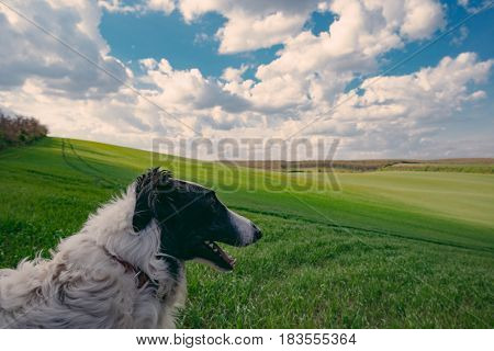 Cute dog watching land