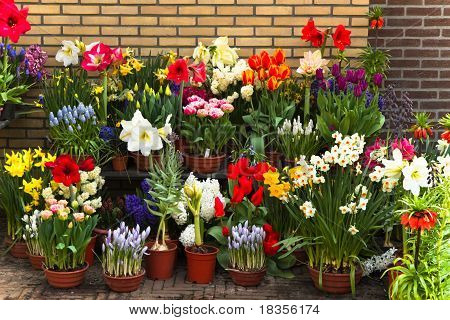 Wall With Collection Of Colorful Spring Flowers