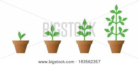 Vector illustration of a set of green icons - plant growth phase in a pot isolated on white background