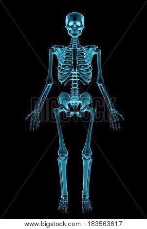 A Negative radiograph of a human skeleton