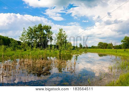 Spring landscape with swamp in steppe