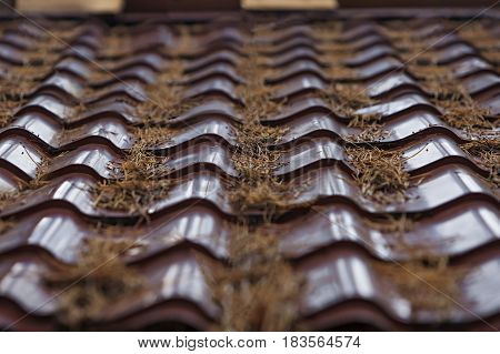 metal tile, metal roofing, fragment of the roof
