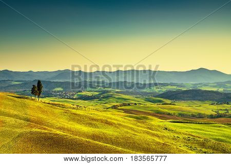 Tuscany sunset. Trees rolling hills and meadows countryside landscape. Volterra Italy Europe.