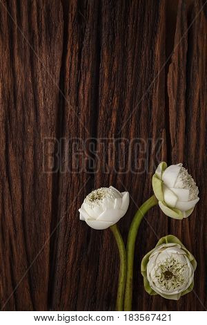 Green Lotus Flower Decoration On Wooden Background