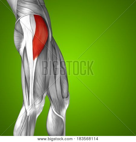 Concept or conceptual 3D illustration human upper leg anatomy or anatomical and muscle on green background