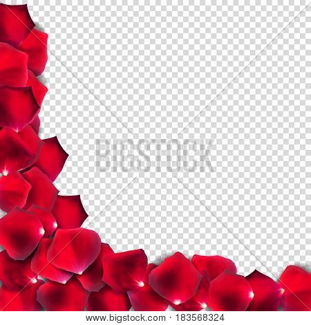 Abstract Natural Rose Petals on Transparent Background Realistic Vector Illustration EPS10