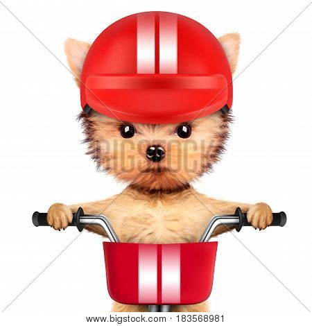 Funny racer dog sitting on a red bike and wearing helmet. Sport and championship concept. Realistic 3D illustration of yorkshire terrier with clipping path