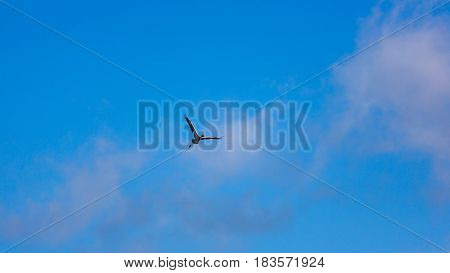 The crane is flying in blue sky
