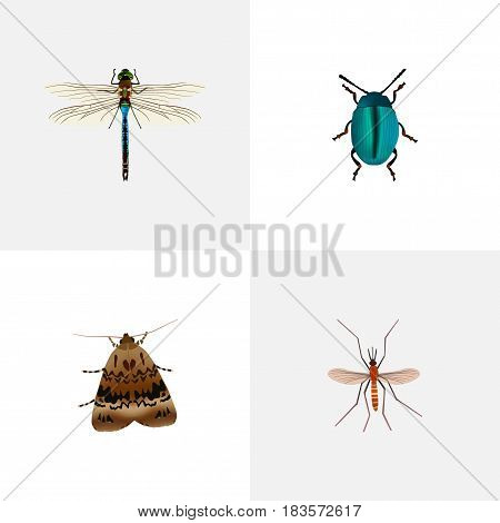 Realistic Bug, Butterfly, Gnat And Other Vector Elements. Set Of Bug Realistic Symbols Also Includes Alive, Moth, Dragonfly Objects.