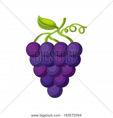 grapes fresh fruit icon vector illustration design