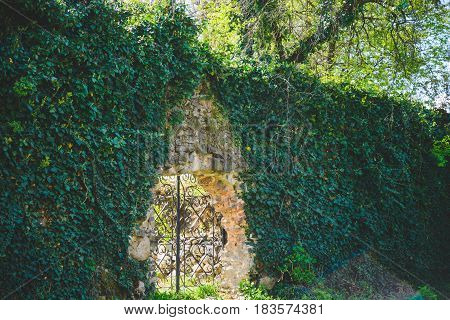old iron gate in ivy with light throught the gate