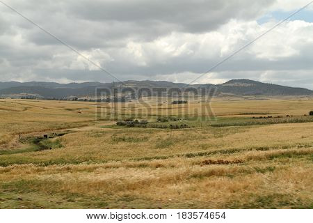 Grain fields and landscapes in the Bale Mountains of Ethiopia