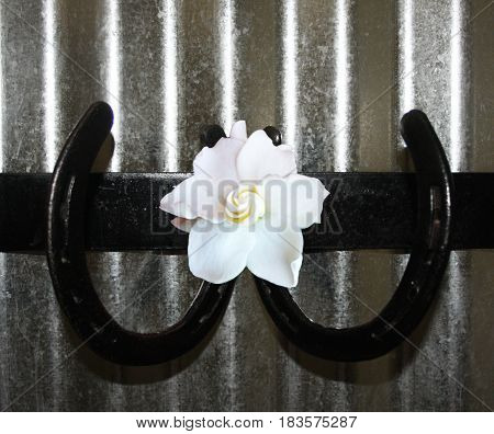 Horse shoes attached to corrugated metal wall with gardenia flower