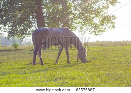 Horse brown color on green glade. Domestic animal horse grazes on pasture. Summer rural landscape with horse in meadow, retro effect