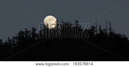 Full moon night in Nepal. Full moon rising behind a forest.